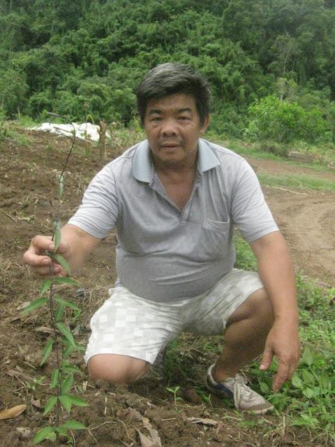 Lão nông ôm mộng trồng cây ba kích phủ khắp Việt Nam