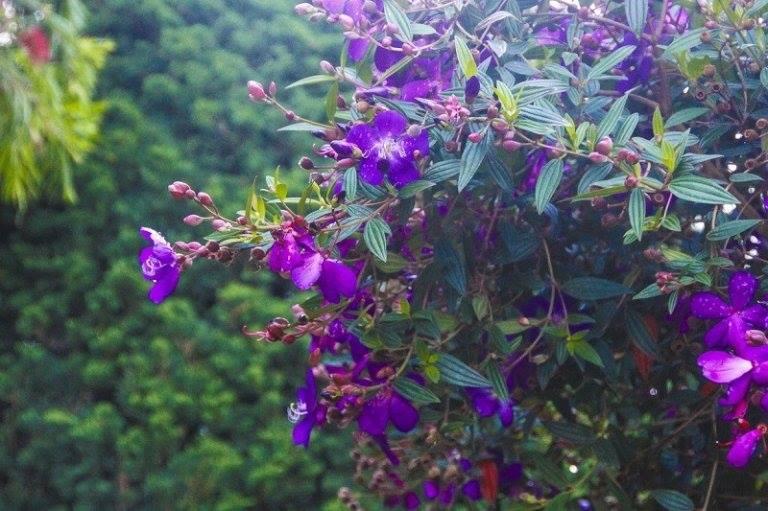 19 Cây thuốc nam giải độc cơ thể mà bạn có thể tìm ngay trong vườn nhà mình