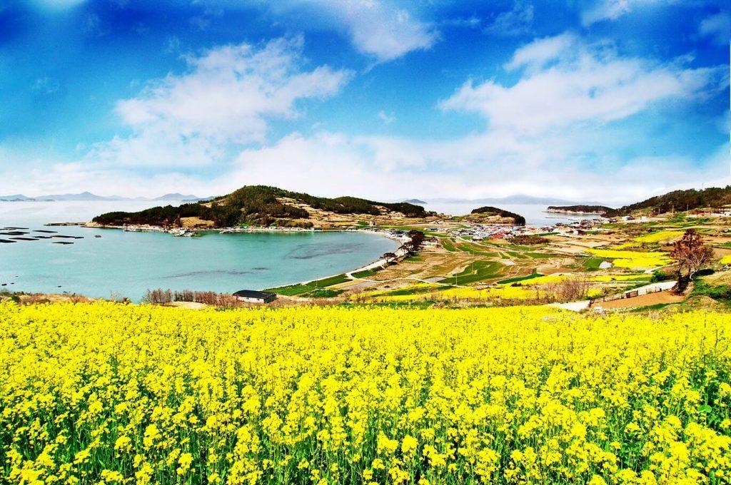 Du lịch Hàn Quốc – Say đắm vẻ đẹp lãng mạng của 3 hòn đảo mộng mơ