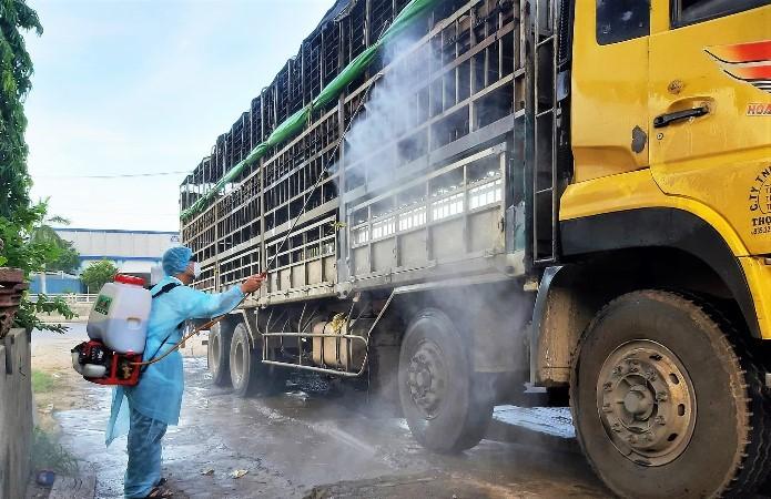 Phát hiện xe tải chở lợn nhiễm dịch tả lợn châu Phi đi bán