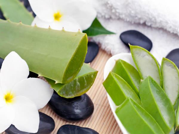 Công dụng làm đẹp của lô hội giúp cơ thể chống viêm nhiễm, lão hóa