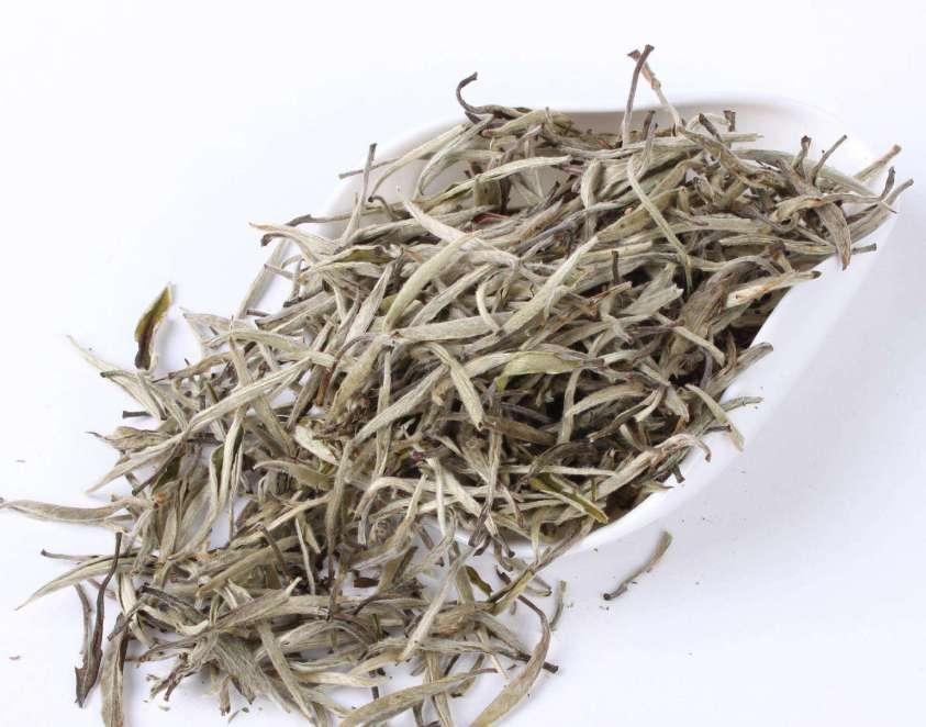 Tất tần tật những điều thú vị về Bạch Trà (trà trắng)