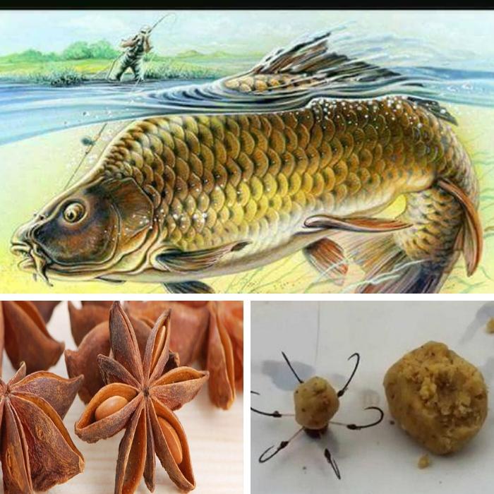 Hoa hồi câu cá chép sử dụng như thế nào hiện nay?
